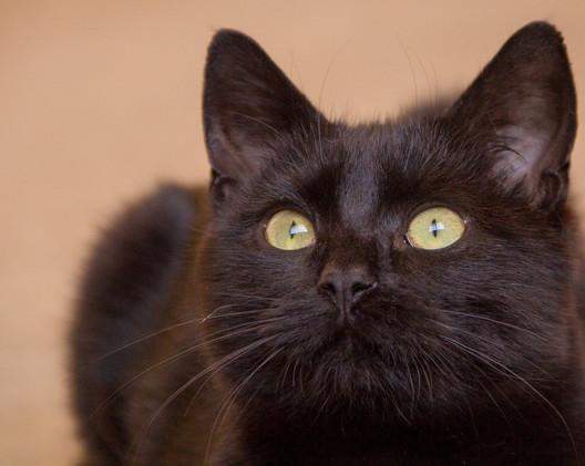 Black cat--5 (Large).jpg
