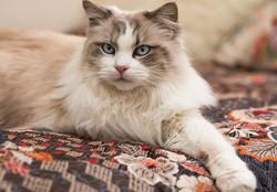 SAM assisted cat 1