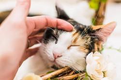 Kittie in foster care 2