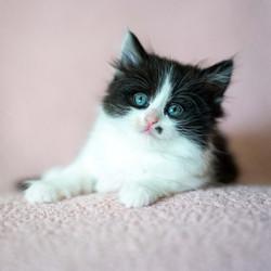 SAM assisted kitten 20