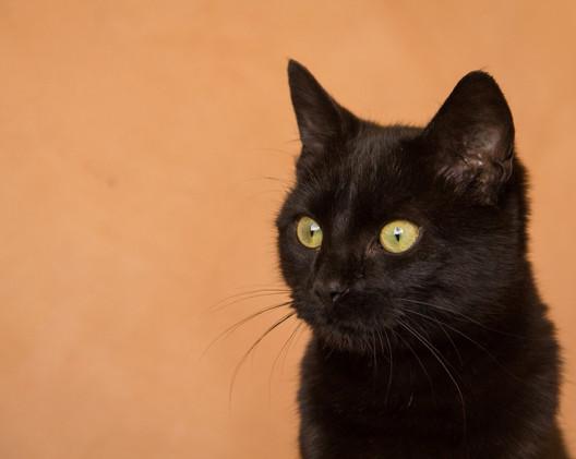Black cat-0408 (Large).jpg