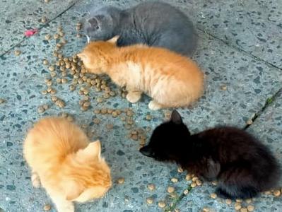 Help! I found a cat colony