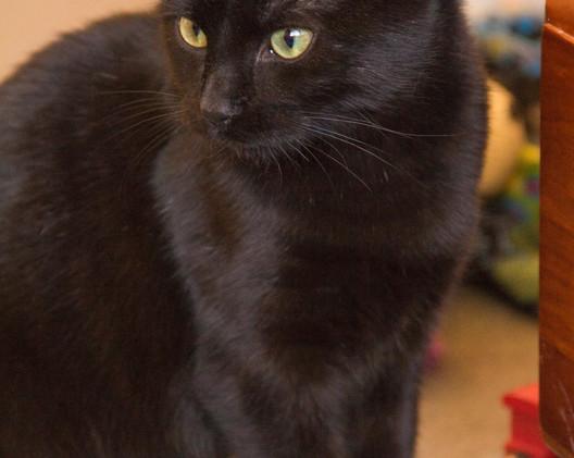 Black cat--2 (Large).jpg