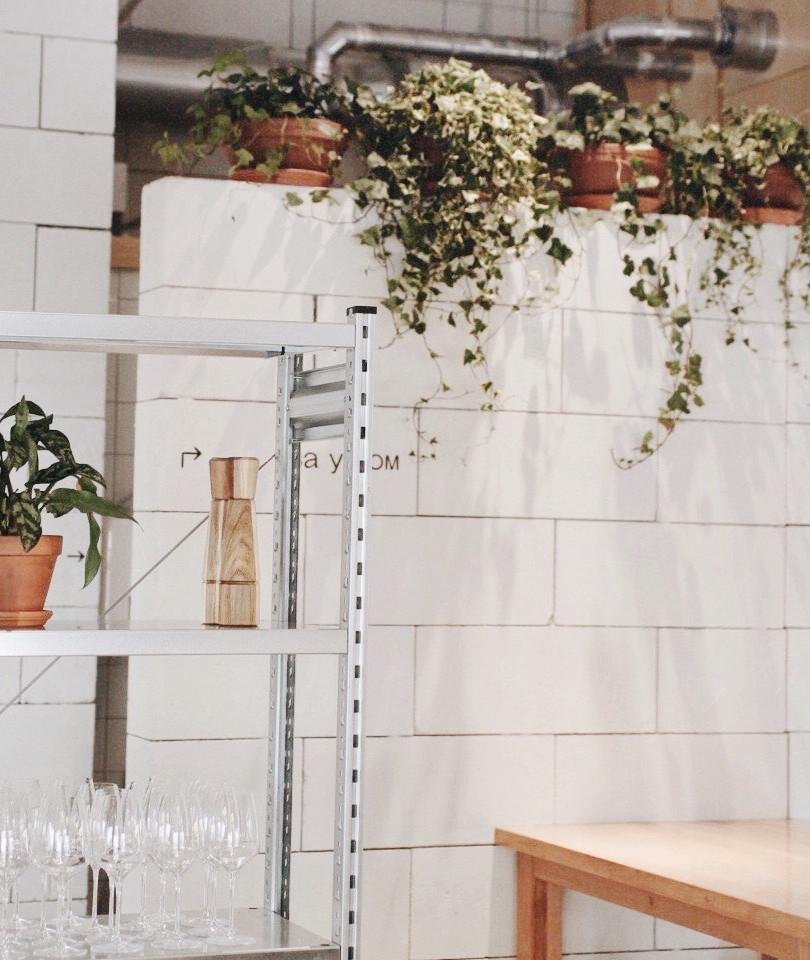 Пустое пространство над стеной мы закрыли ампельным растениями — Хедерой и Крестовником