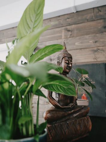 Все растения, что уже жили в тату-студии мы пересадили, вернули декоративнй вид. Некоторым понадобилось лечение от вредителей и корневой гнили.