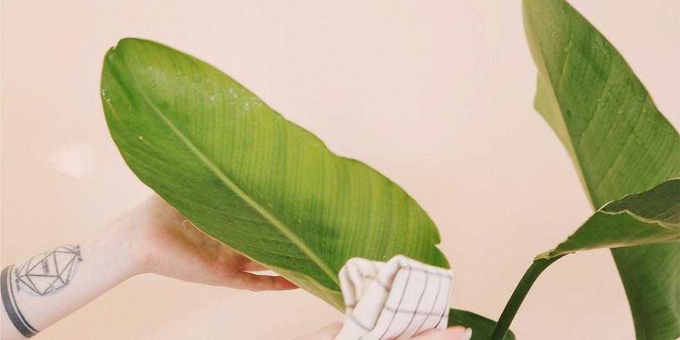 """Лекция """"Базовый уход, лечение и восстановление декоративности растений"""". Мастер-класс по лечению и первичной обработке"""
