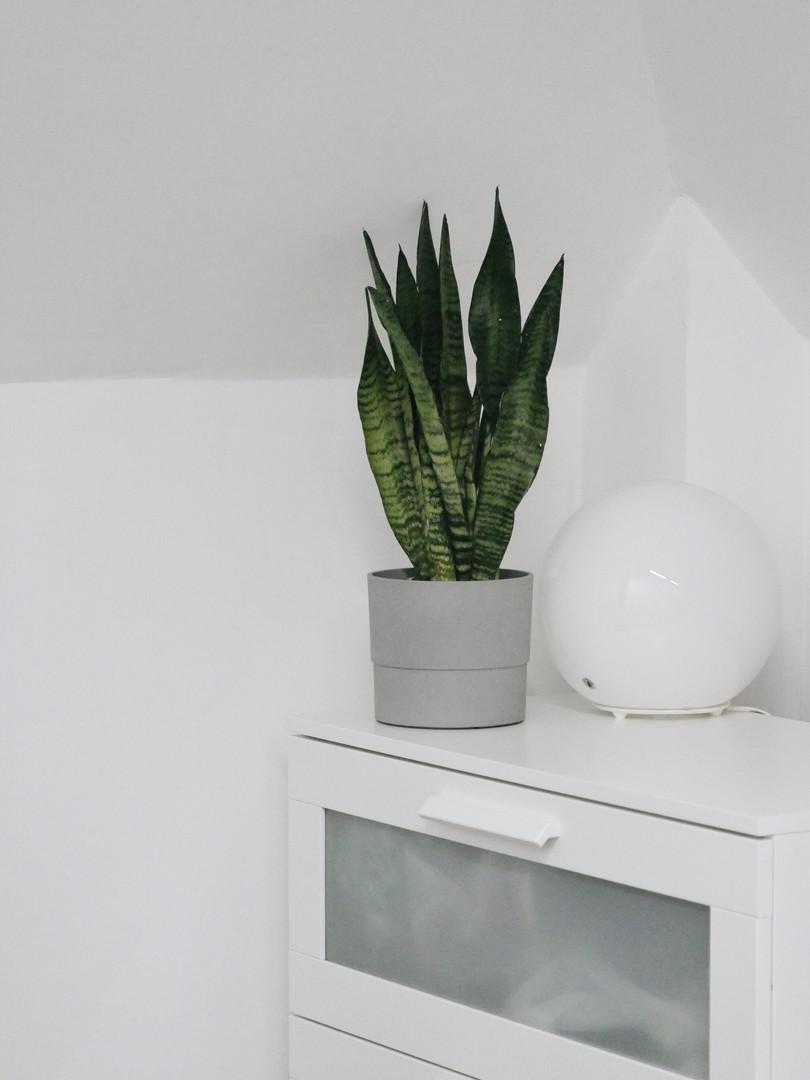 Главной задачей было подобрать максимально неприхотливые и теневыносливые растения, так как в офисе есть только довольно маленькие мансардные окна.