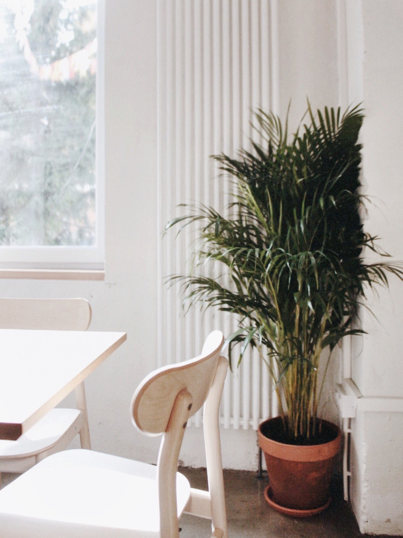 Некоторые растения уже жили в заведении — например, подвесные папоротники, хлорофитум и сциндапсус. Мы дополнительно разместили крупные растения вроде этого Хризалидокарпуса