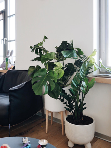 From the living room they wanted to make a green oasis from large spreading plants and make a multi-level composition from the pots