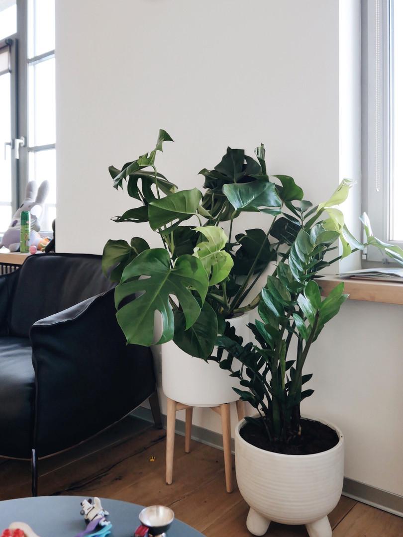 Из гостиной хотели сделать зеленый оазис из крупных раскидистых растений и сделать разноуровневую композицию благодаря горшкам