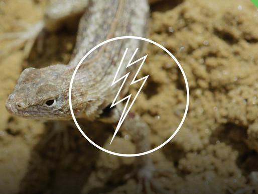 The Proto Reptilian