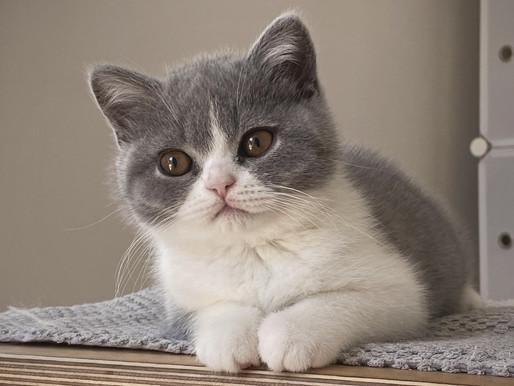 Comment adopter un chat en France ?