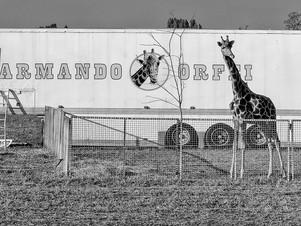 Circo Armando Orfei, Vittuone, Milano, 2016