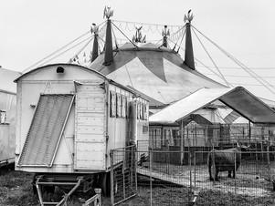 Circo Medrano, Assago, Milano, 2015