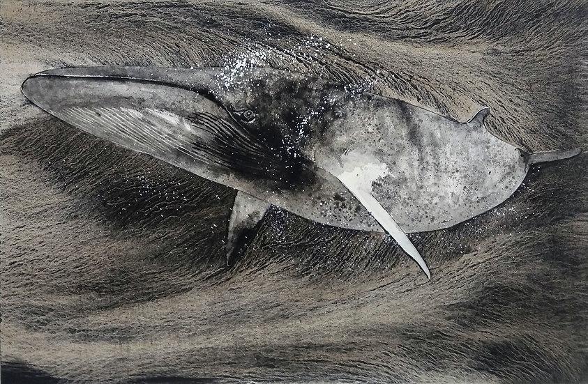 """Giorgio Maria Griffa """"Blue Whale"""""""