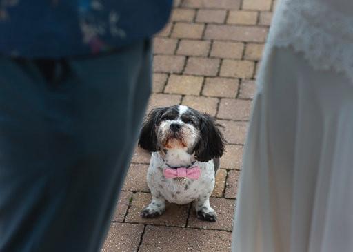 dog during wedding ceremony at Alcumlow Wedding Barn