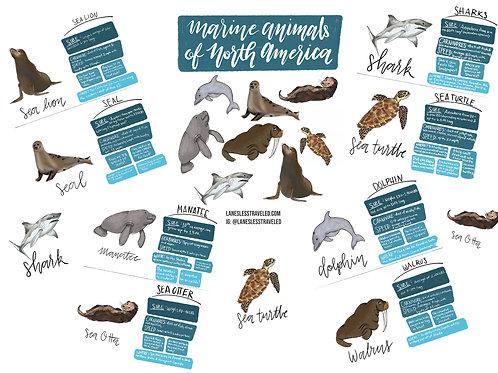 Marine Animal Fact Cards