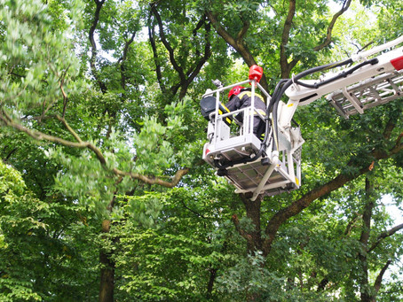 Tree Trimming and Arbor Care