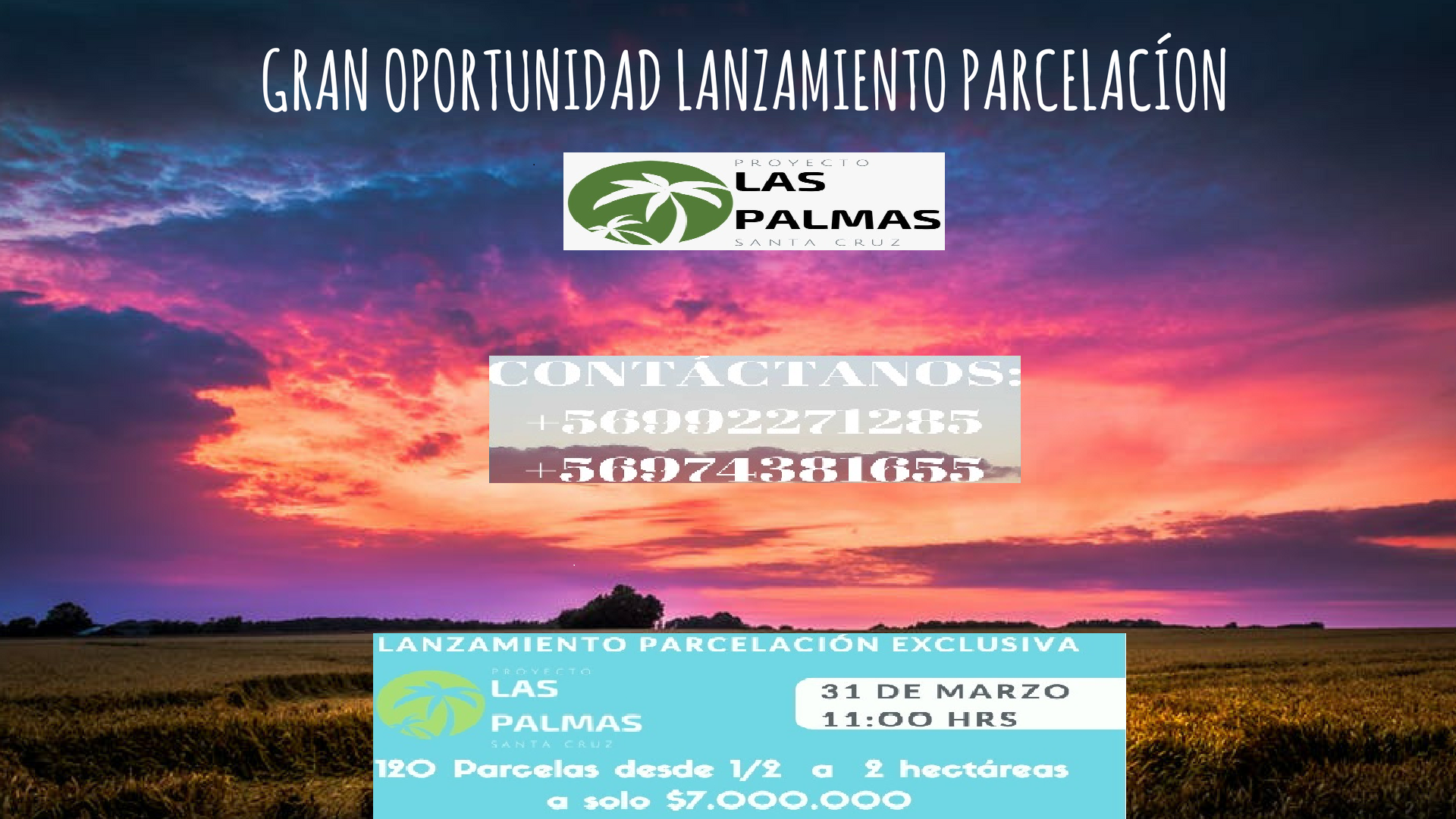 Lanzamiento Palmas Santa Cruz