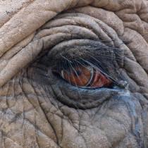elefant-auge-tiergespraeche-in-der-natur