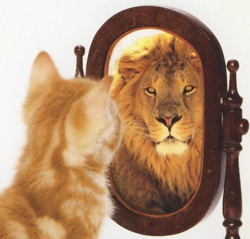 Pic-cat-in-mirror-sq-cropped