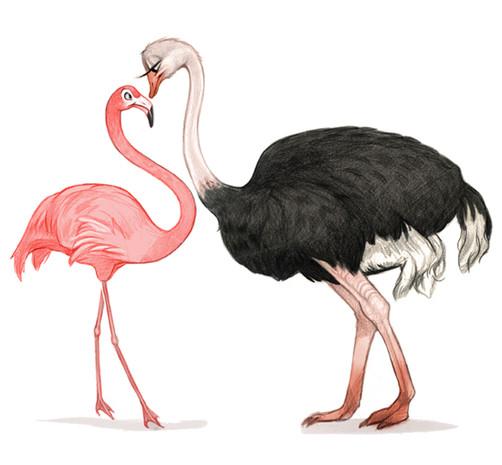 birdssoft.jpg