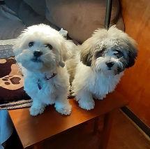 Shelby&Hatch