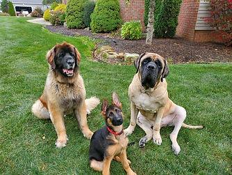 Dexter,Max,Henry