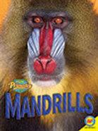 A2 V2 Book: Mandrills