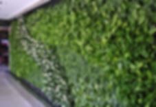 Фитостены из живых растений в Москве