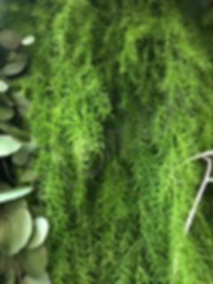 iskusstvennaya-zelen`-dlya-dekora-sten