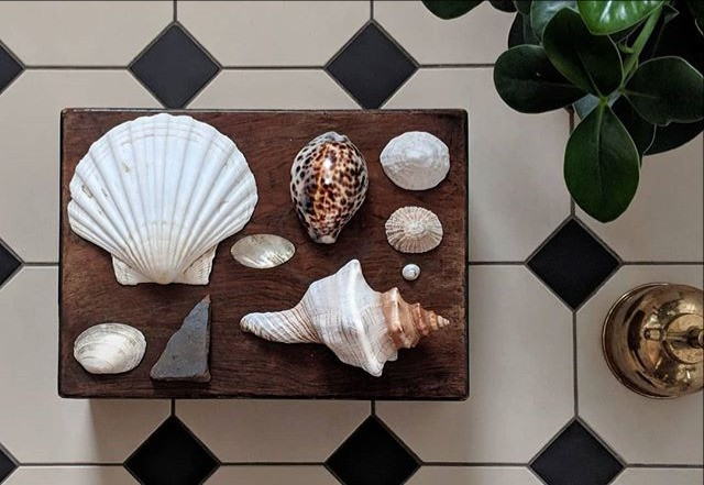 A collection of shells are placed in a uniform way on top of an antique wooden box. The box sits on a black and white tiled floor and a plant and a brass plant mister are just in shot.