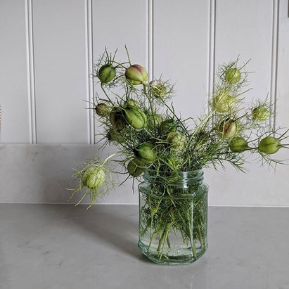 Nigella seed heads in a jam jar vase on a kitchen counter.