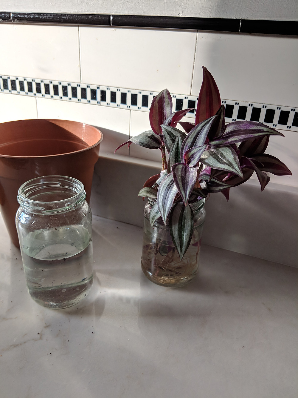 On a kitchen counter, a jar of plant cuttings sits next to an empty plant pot and a jar of water.