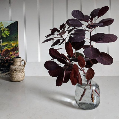 A vase of smokebush branches on a kitchen counter