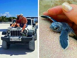 Jeep Turtle.jpg