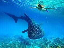 Whale-Sharks-Trips-1.jpg
