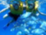 snorkel_with_schools_of_fish_277-12.jpg