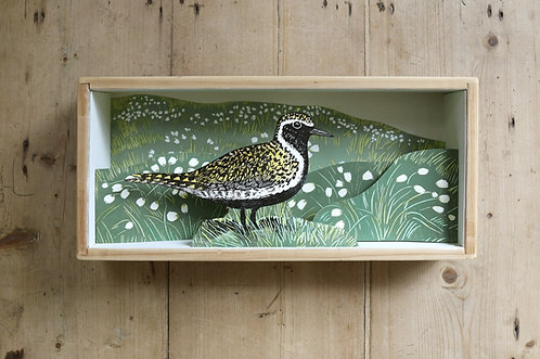 Golden Plover and Cotton Grass Diorama