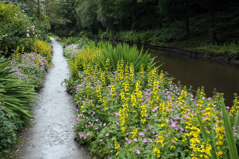 Garden plants have colonised the canal bank with yellow and pink flowers.