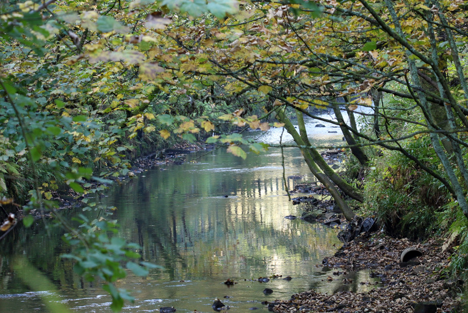 A calm and autumnal river Calder flowing between Hebden Bridge and Todmorden.