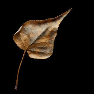 Leaf #1