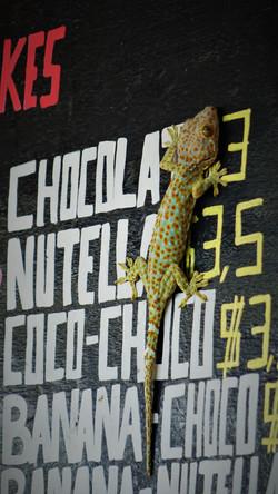 Un gecko plûtot joli
