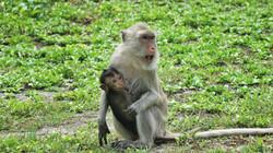 petit singe et sa maman