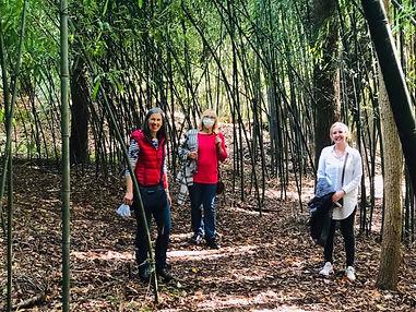 in the bamboo.jpg