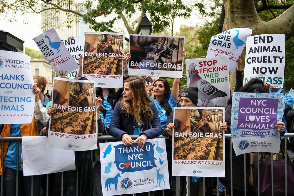 Защитники прав животных на митинге