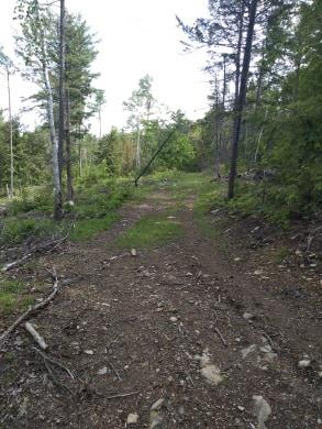 Peaceful hiking trails