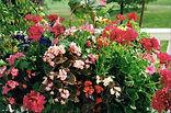 Floral Colors 0001.jpg