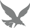 Edge Scalp Ink Hawk (grey).png