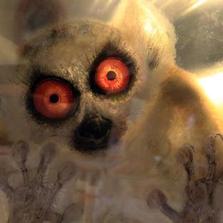 Ringtailed Lemur (Conspiracy)